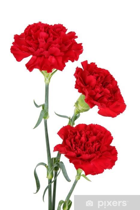 Fototapeta Trzy Gozdziki Kwiaty Pixers Zyjemy By Zmieniac