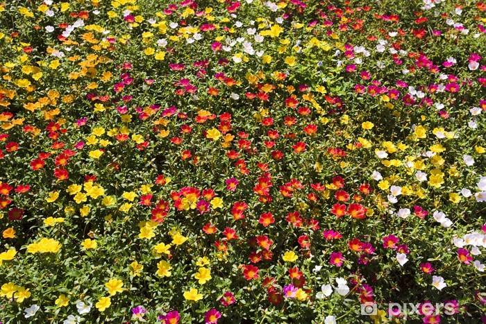 Fototapeta winylowa Driakiew - Kwiaty