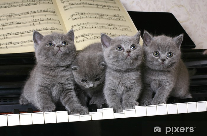 Four British kitten on the piano Pixerstick Sticker - Themes
