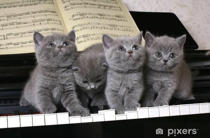 Sticker Pixerstick Quatre chatons britanniques sur le piano - Thèmes