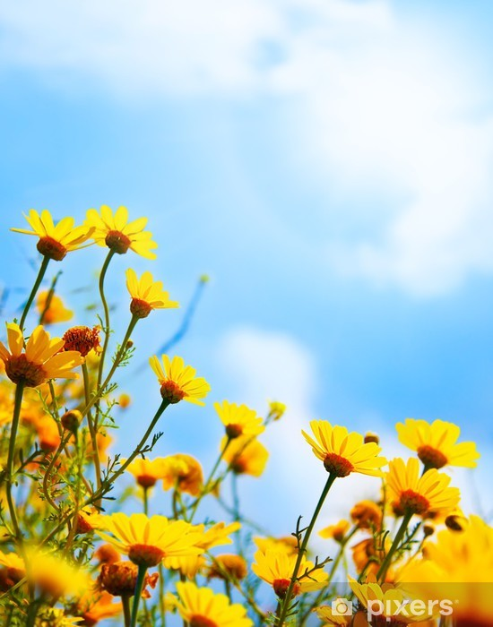 Vinyl-Fototapete Blumen Grenze über Himmel - Land