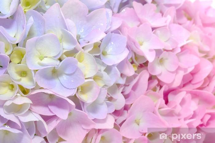 Çıkartması Pixerstick Güzel Mor ve Pembe Ortanca Çiçekler Close-up -