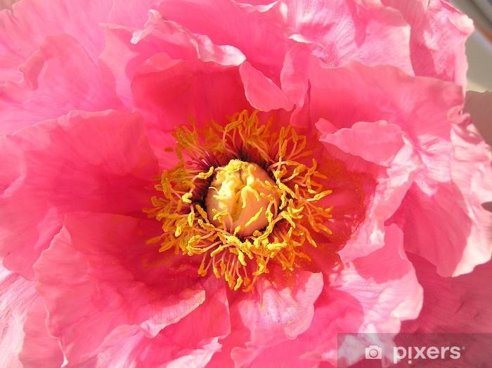 Sticker Pixerstick Paeonie - Fleurs