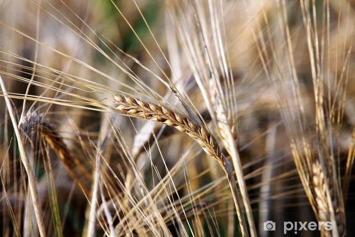Vinyl-Fototapete Getreide - Landwirtschaft