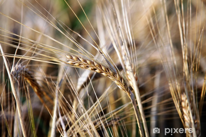 Sticker Pixerstick Getreide - Agriculture