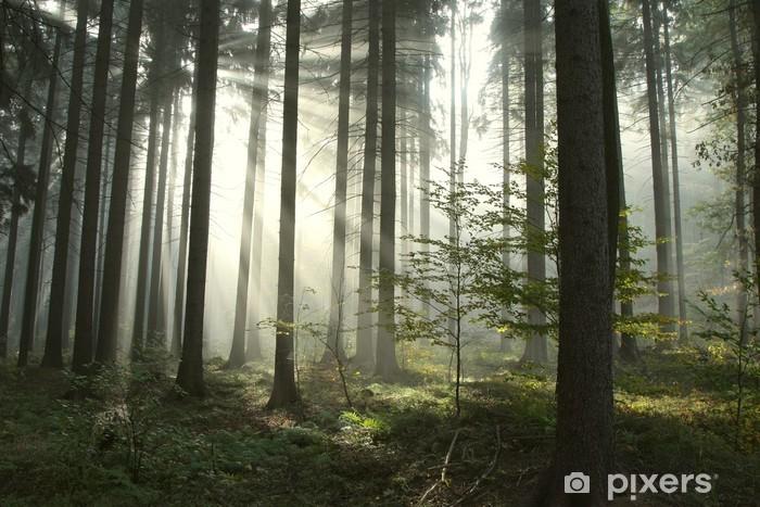 Pixerstick Sticker Naald bos verlicht door de ochtendzon op een mistige herfstdag - Stijlen
