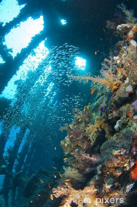 Fototapet av vinyl Myke koraller og glassfisk inne i et stort skipbrudd - Vannsport