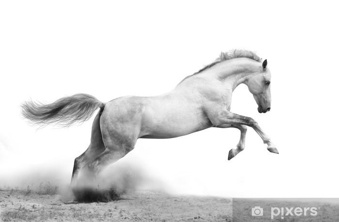 Fotomural Estándar Plata-blanco sobre negro semental -