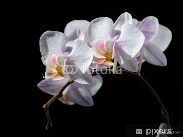 Naklejka Pixerstick Czerwona orchidea - Kwiaty