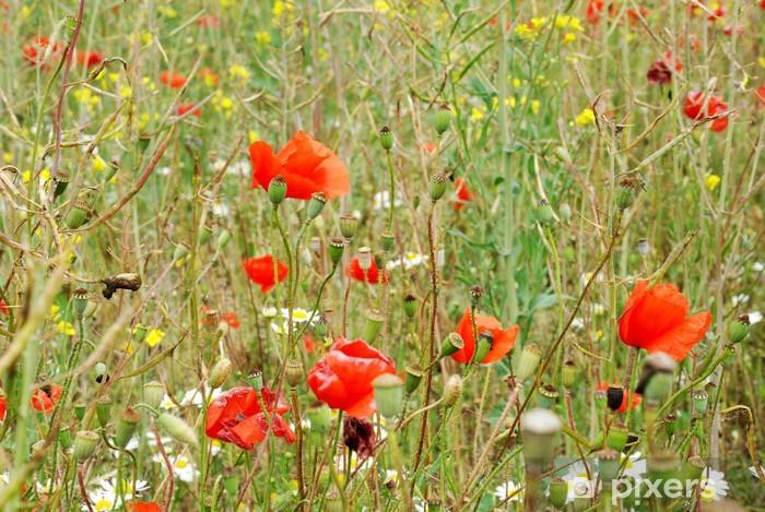 Papier peint vinyle Summer meadow avec marguerites et coquelicots - Saisons
