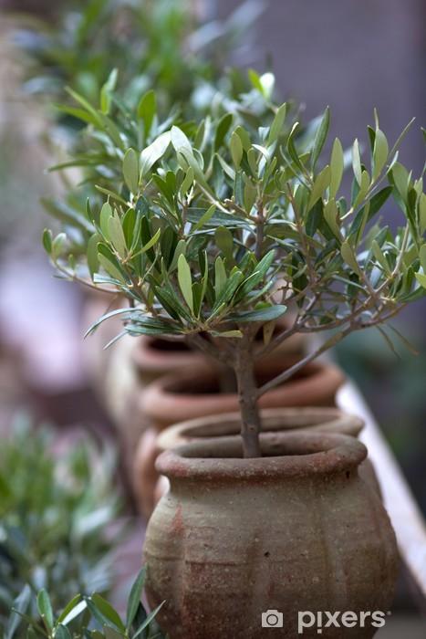 Super Fototapete Olive, Oliven, Pflanze, Süden, Mittelmeer, Baum, Garten @MT_08