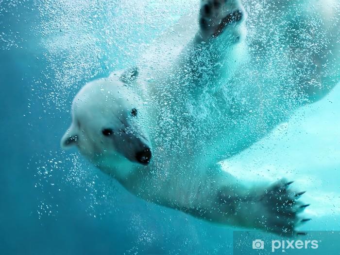 Fotomural Estándar Oso polar bajo el agua ataque - Temas
