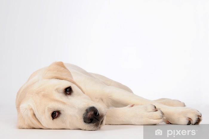 Fototapeta winylowa Pies - Tematy