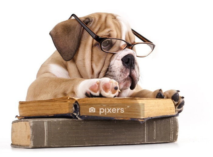 purebred english Bulldog in glasses and book Wall Decal - Wall decals
