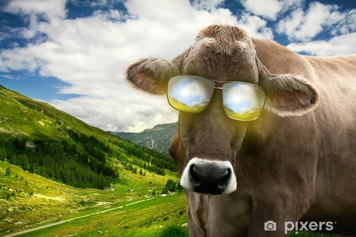 Papier peint vinyle Vache avec lunettes de soleil - Vacances