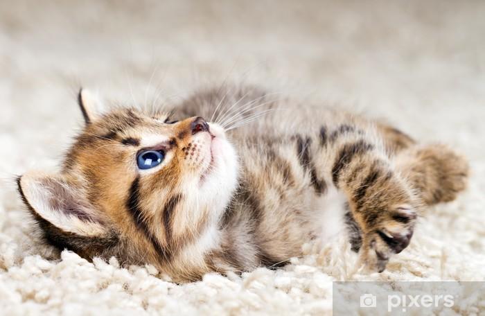 Vinyl-Fototapete Funny kitten in carpet - Themen