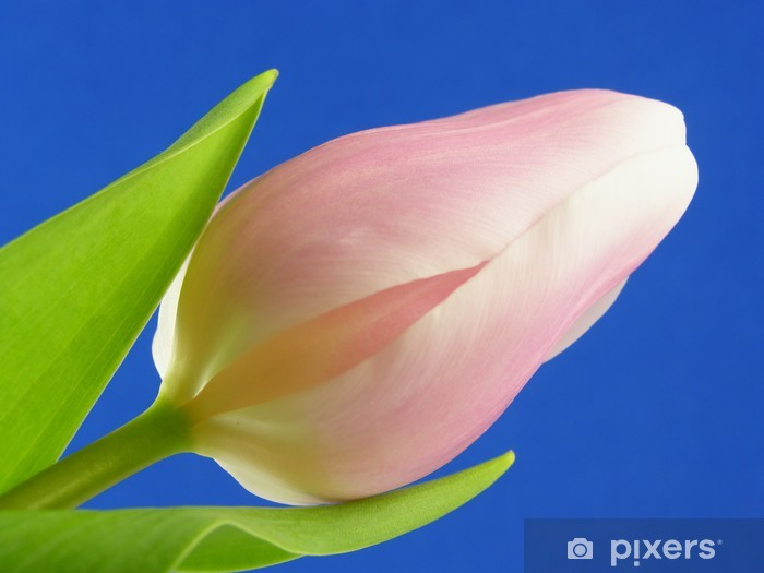 pink flower Pixerstick Sticker - Seasons