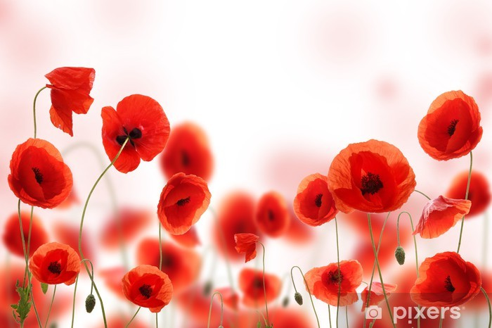 Poppy field Pixerstick Sticker - Flowers