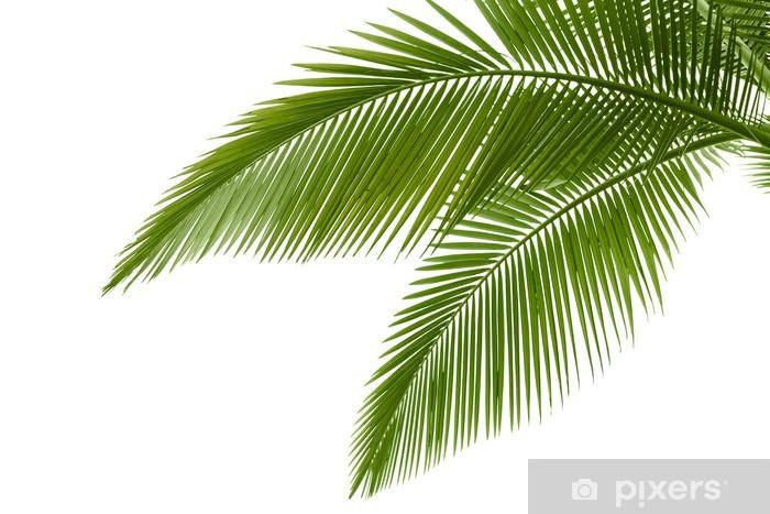 Fototapeta winylowa Liści palmowych - Drzewa i liście