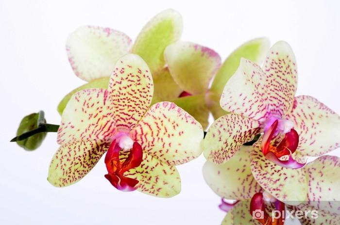 Sticker Pixerstick Orchidées Blüten Zen Bien-être - Beauté et soins du corps