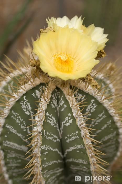 Pianta Grassa Fiori Gialli.Yellow Flowers Of A Succulent Plant Wall Mural Pixers We Live