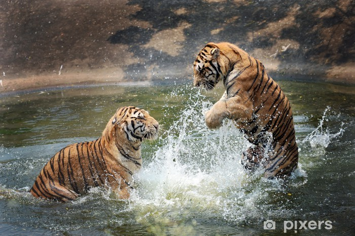Nálepka Pixerstick Tygři hrají ve vodě - Témata