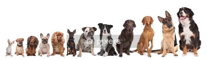 Naklejka na ścianę Dwanaście psów w rzędzie - Naklejki na ścianę
