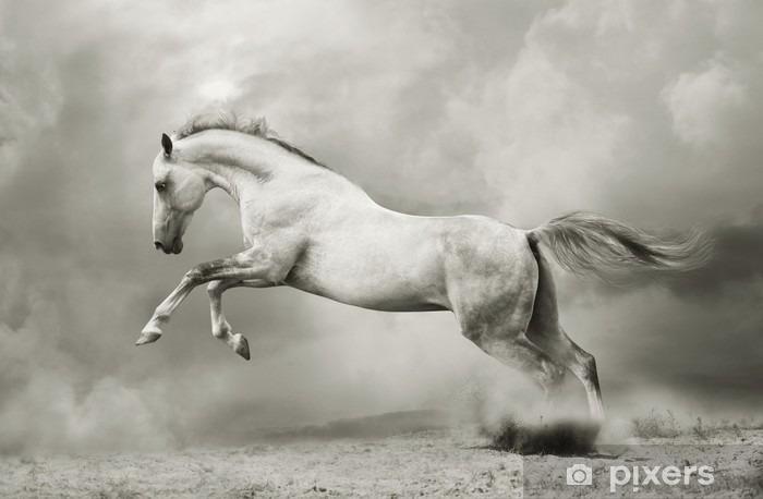 Fototapeta winylowa Srebrno-biały ogier na czarno - Tematy