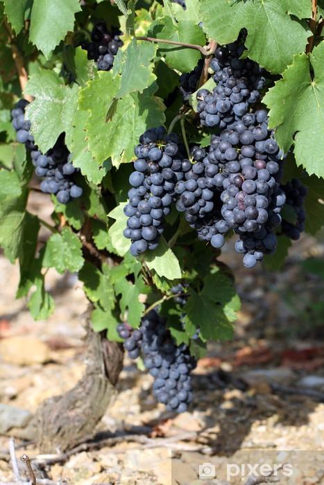 Fototapeta winylowa Winnica - Rolnictwo