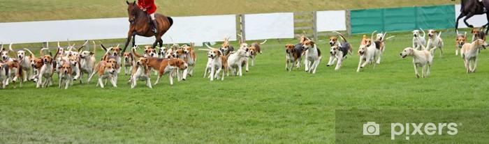Vinyl Fotobehang Een weergave door een Pack van Beagle Jachthonden. - Buitensport
