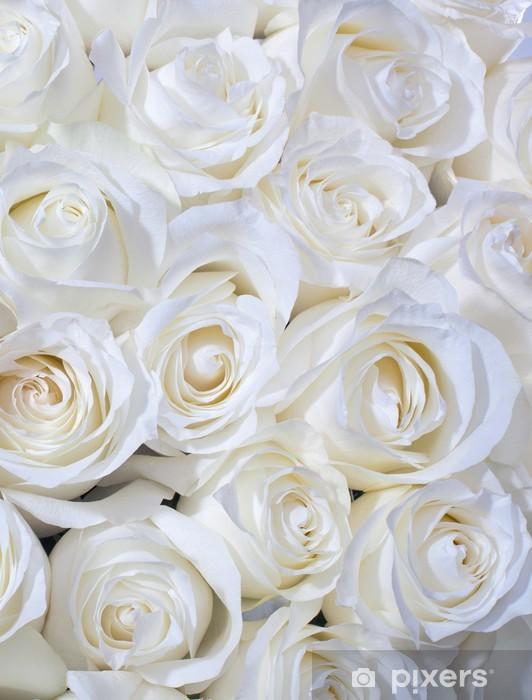 Hintergrundbilder weiße rosen 22+ Hintergrundbilder