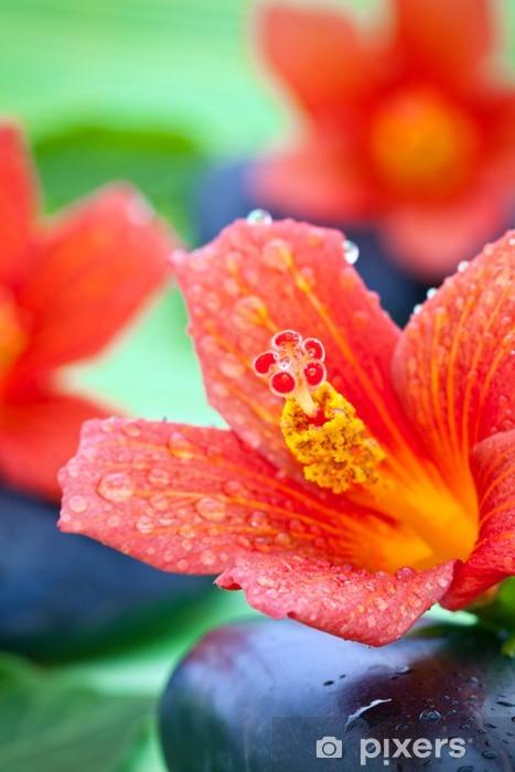 Naklejka Pixerstick Zen Kamyczki i kwiaty hibiskusa - Kwiaty