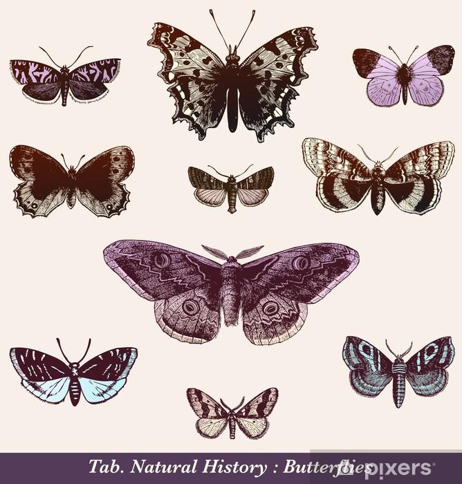 Naklejka Pixerstick Motyle - Inne Inne