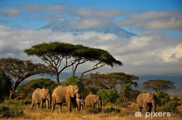 Fotomural Estándar Familia del elefante delante del monte. Kilimanjaro - Elefantes