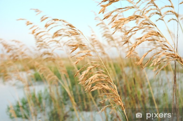 Sea Oats in the Sand Dunes at the Beach Pixerstick Sticker - Holidays