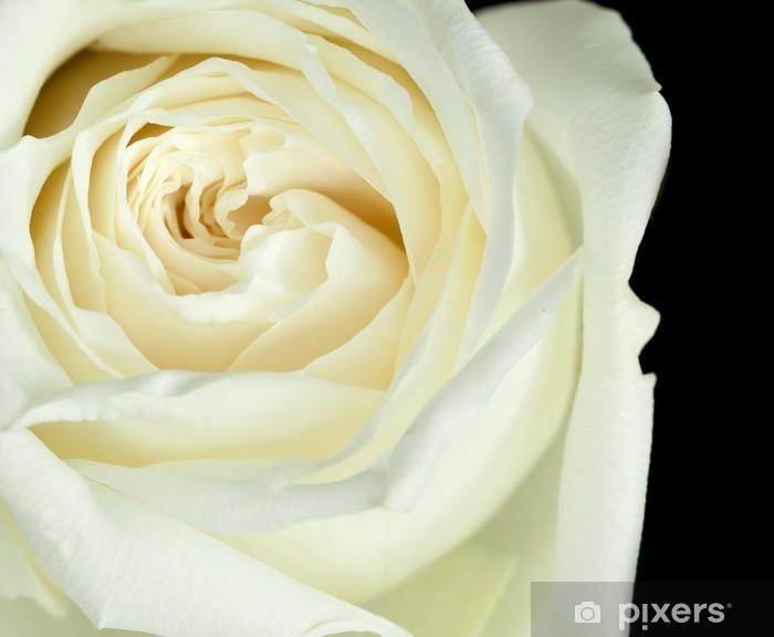 Papier peint vinyle Rose blanc cassé - Thèmes