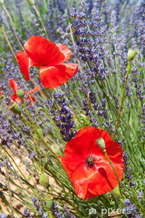 Fototapeta winylowa Lavender i czerwone maki - Tematy