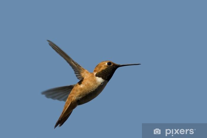 Hummingbird Pixerstick Sticker - Hummingbirds