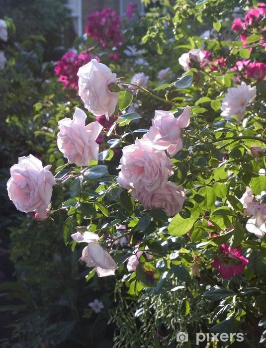 Naklejka Pixerstick Róże pnące - Kwiaty