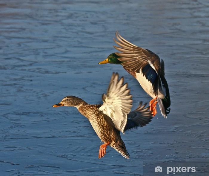 Fototapeta winylowa Krzyżówki lądowania - Ptaki