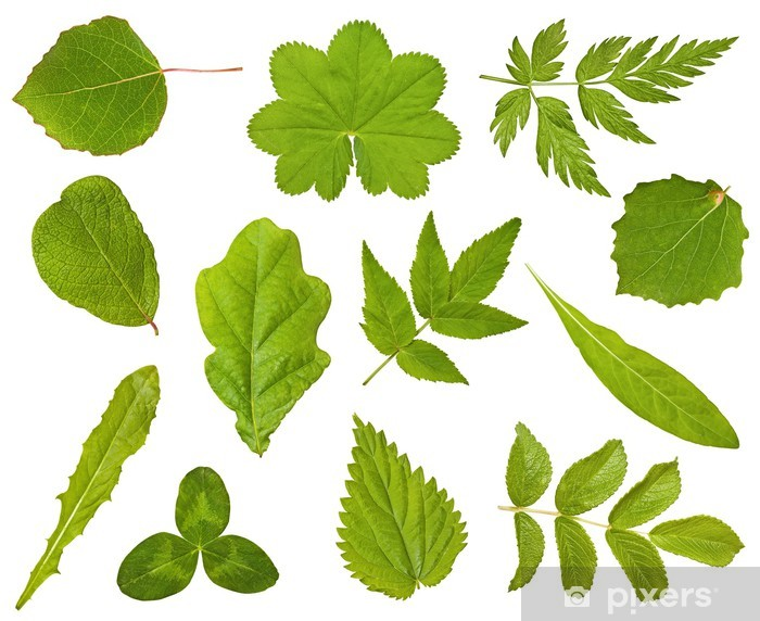 Collection Of Leaves Of Different Plants On The White Wall Mural