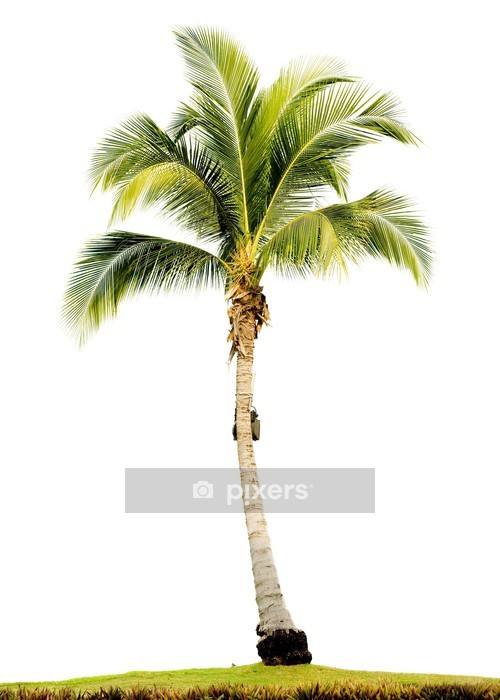 palm tree isolated Wall Decal - Palm trees