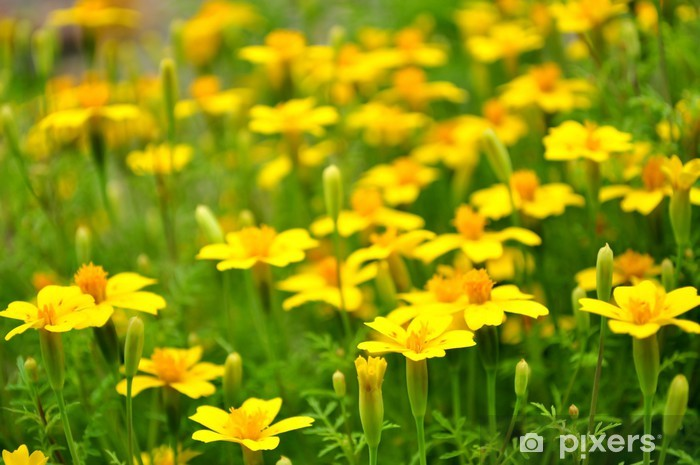Naklejka Pixerstick Kwiaty - Kwiaty