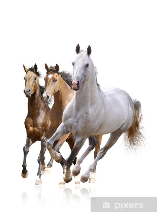 Pixerstick Dekor Hästar isolerade - Väggdekor