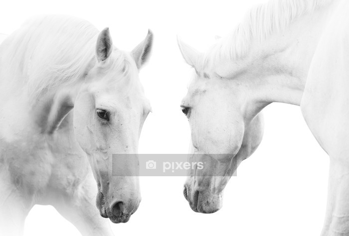 white horses Wall Decal - Themes