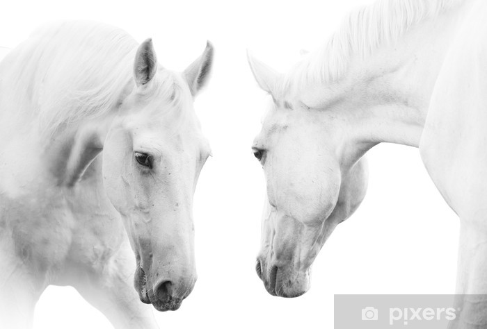 Mural de Parede em Vinil white horses - Temas