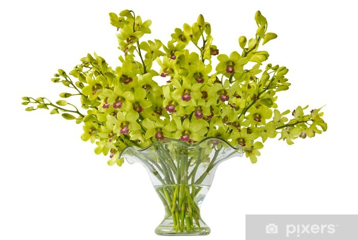Green Dendrobium Orchids in Glass Vase Vinyl Wall Mural - Celebrations