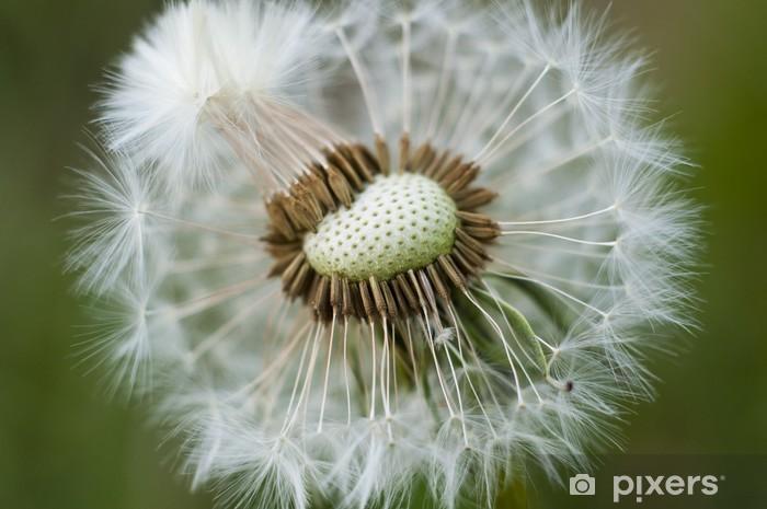 Fototapeta winylowa Kwiaty mniszka lekarskiego - Tematy