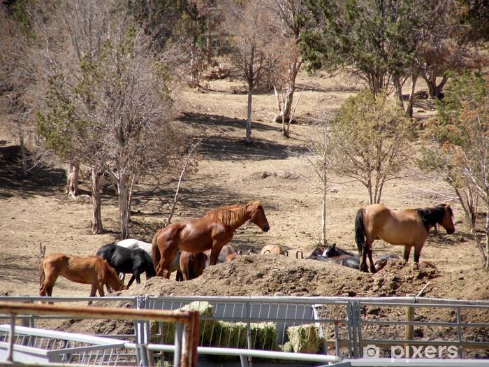 Fototapeta winylowa Mustangi na BLM holdingowej centrum, utah - Wolność