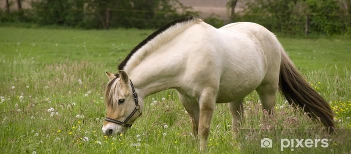 Fototapeta winylowa Norweski fiord konia na łące wiosną - Pory roku